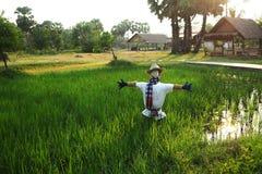在米领域的稻草人 免版税库存照片