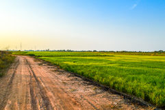 在米领域附近的土壤路 库存图片