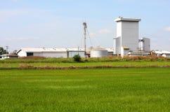 在米领域,泰国的筒仓。 库存图片