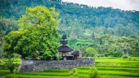 在米tarrace之间,巴厘岛,印度尼西亚豪华的绿色的一个寺庙在伴奏者的 图库摄影