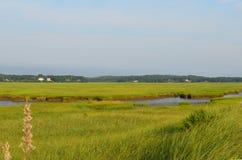 在粉末点的高沼泽草在Duxbury 免版税库存图片