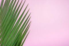 在粉红彩笔台式的绿色棕榈叶 背景 夏天Vacat 库存照片