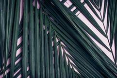 在粉红彩笔台式的绿色棕榈叶 背景 夏天Vacat 免版税库存照片