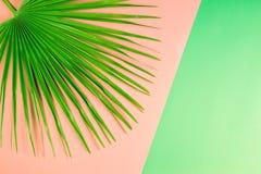 在粉红彩笔和绿色背景的热带棕榈叶 库存图片