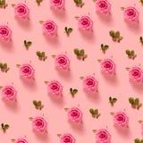 在粉红彩笔背景的桃红色玫瑰 免版税图库摄影