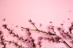 在粉红彩笔背景的桃花 E 库存图片