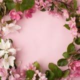 在粉红彩笔背景的欢乐花苹果树构成边界 顶上的视图 免版税图库摄影
