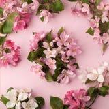 在粉红彩笔背景的欢乐花苹果树构成 顶上的视图 免版税库存照片