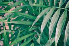 在粉红彩笔背景的热带叶子 背景细部图花卉向量 免版税库存图片