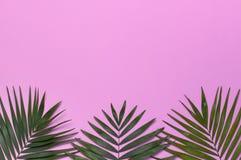 在粉红彩笔背景的热带棕榈叶 r 夏天背景,自然 创造性最小 库存照片