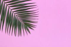 在粉红彩笔背景的热带棕榈叶 r 夏天背景,自然 创造性最小 免版税库存图片