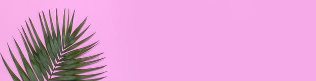 在粉红彩笔背景的热带棕榈叶 r 夏天背景,自然 创造性最小 免版税库存照片