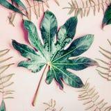 在粉红彩笔背景,顶视图的绿色热带棕榈叶 库存图片