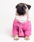 在粉红色的俏丽的哈巴狗 免版税库存图片