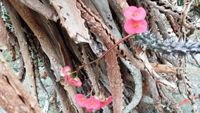 在粗砺和刺背景的桃红色嫩花  库存照片