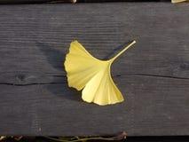 在粗砺的木板条的下落的银杏树biloba叶子 免版税库存图片