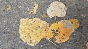 在粗砺的柏油路的平的干燥粉碎的叶子 免版税库存图片