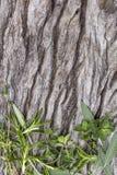 在粗砺的老木材顶视图的草本 免版税库存图片