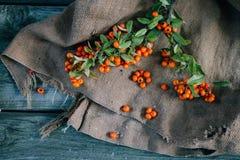 在粗麻布和木背景的秋天莓果 图库摄影