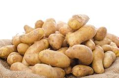在粗麻布的新的rattes土豆 免版税库存照片