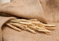 在粗麻布的麦子 免版税库存照片