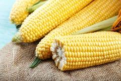 在粗麻布,农夫` s收获视图的被剥皮的年轻玉米从上面 S 图库摄影