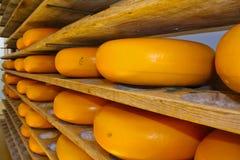 在精炼的乳酪raclette在荷兰扁圆形干酪荷兰 库存照片