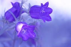 在精美背景的蓝色响铃 软的焦点和艺术性的图象 选择聚焦 库存图片