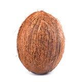 在精采背景的一个特写镜头坚硬椰子 可口夏天充分结果实维生素 食家的坚果 图库摄影