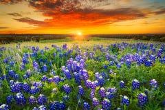 在糖里奇路,恩尼斯, TX的日落 免版税库存图片