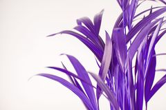 在紫外的热带异乎寻常的棕榈叶 免版税图库摄影