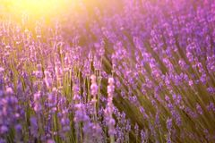 在紫罗兰色淡紫色的日落 免版税图库摄影