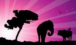 在紫色日落的非洲 库存图片