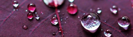 在紫色植物叶子的微水下落 免版税库存图片