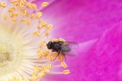 在紫色花的翱翔飞行 库存照片