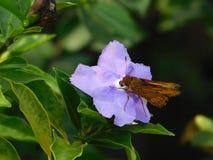 在紫色花的蝴蝶 免版税库存照片