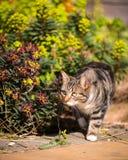 在繁茂花园设置的虎斑猫 免版税库存图片