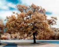 在红外线的树 免版税库存照片