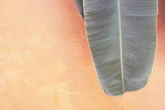 在红橙色被绘的墙壁背景的香蕉叶子有空间的 免版税库存照片