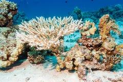 在红海的底部的美好的珊瑚 免版税库存图片