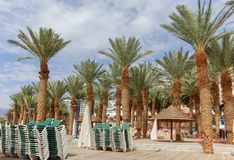 在红海的美丽的公开沙滩在有stro umb的埃拉特 免版税库存图片