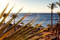 在红海的遮阳伞 库存图片