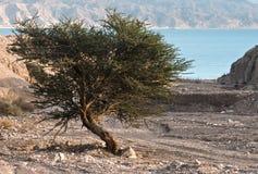 在红海视图附近的沙漠以色列 免版税库存照片