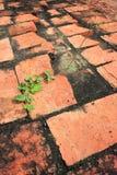 在红砖的植物生长 免版税库存照片
