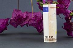 在红色九重葛前面的欧洲货币在灰色背景 免版税库存照片