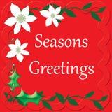 在红色假日背景的白色一品红 库存照片