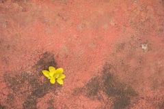 在红色具体地面的金黄花秋天 库存照片