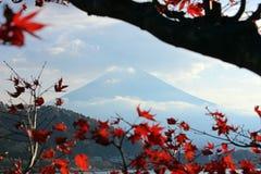 在红色叶子之间的富士山 库存图片