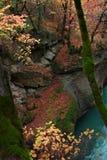 在红色叶子和流动的河晃动长得太大与树、青苔和常春藤 图库摄影