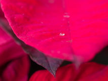 在红色叶子的一水下落 免版税库存图片